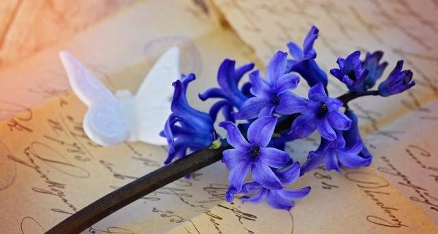 2015603237-hyacinth-782211-0rw7-640x426-mm-100